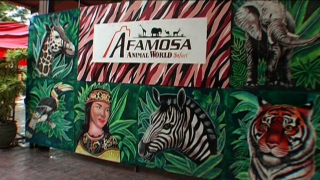 Visit the Wild Safari park A'Famosa in Malaysia - A'Famosa Animal World Safari in Malaysia